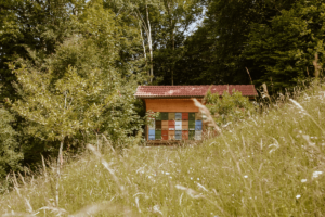 eko-čebelarjenje